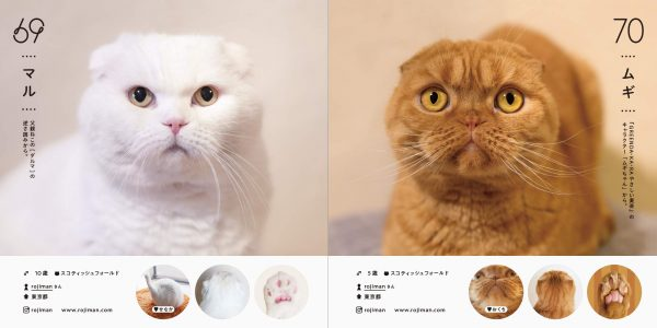 Cat directory100 popular in Japan Japanese Photography
