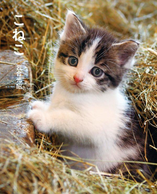 smallcat-mitsuakiiwago