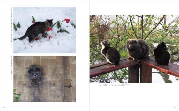 World Cats Travelogue vol.2 by Mitsuaki Iwago